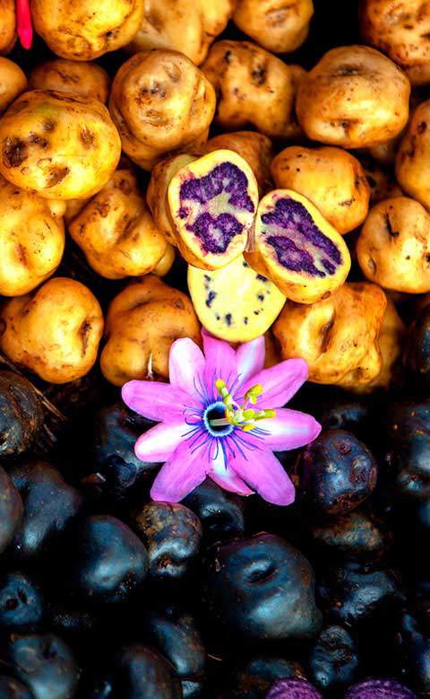 NATIVE POTATOES OF PERU